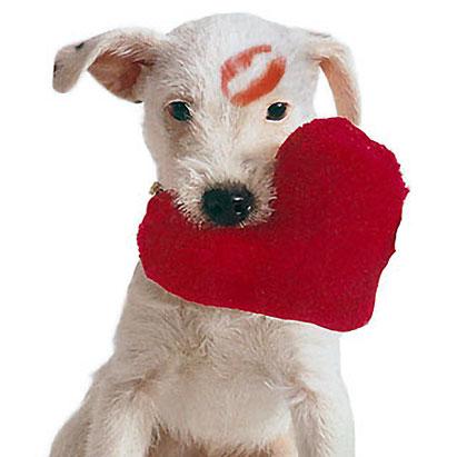 Câştigă cu GSMRoShop.ro vouchere de cumpărături pentru Valentine`s Day